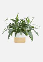 Present Time - Crude pottery plant pot - ceramic