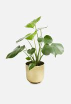 Sixth Floor - Bellamy plant pot - gold
