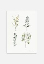 Shealeen Louise - Eucalyptus pieces