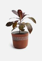 Urchin Art - Poppy outdoor planter - terracotta