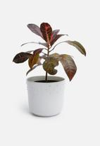 Urchin Art - Sierra outdoor planter - white
