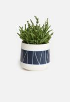 Urchin Art - Reed succulent planter - white & blue