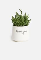 Urchin Art - Grow succulent planter - white & black