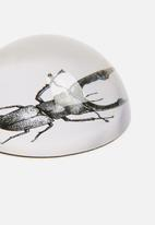 Sixth Floor - Glass paperweight - insect