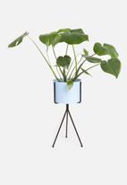 Sixth Floor - Bahati planter - omphalodes