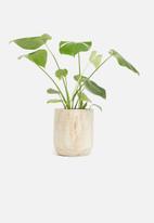 Sixth Floor - Paulownia wooden pot - natural