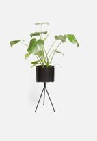 Sixth Floor - Bahati planter - black