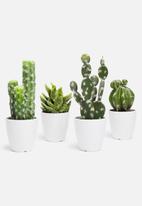 H&S - Saguaro mini potted cactus