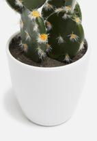 H&S - Prickly pear mini potted cactus