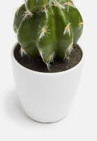 H&S - Echino mini potted cactus