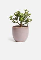 H&S - Reactive glaze flower pot - purple