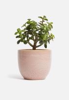 H&S - Reactive glaze flower pot - blush