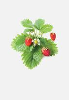 Click and Grow - Wild strawberry - 3 pack