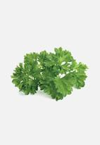 Click and Grow - Parsley - 3 pack