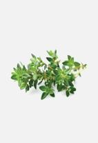 Click and Grow - Thyme - 3 pack