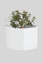 Emerging Creatives - Wall mounted herb box - white