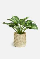 Sixth Floor - Porcupine pot planter - neutral