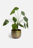 Sixth Floor - Brass flowerpot - bronze