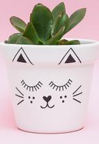 Sugar & Vice - Planter - cutie cat