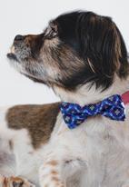 Urban Hound Social - Bow-wow-tie - blue shweshwe