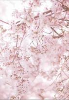 My Beauty Luv - FACE BLOSSOM® 100% Pure Organic Sakura Flower Extract