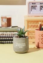 Typo - Tiny planter with plant-concrete bright side