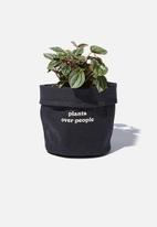 Typo - Canvas planters-plants over people cool grey canvas