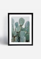 Sixth Floor - Cacti