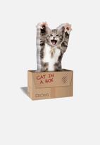Mustard  - Cat in a box
