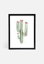 Stohne - Cactus cacti