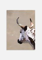 Sarah Allderman - Cow