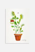 Cat Coquillette - Venus fly trap