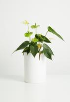 Urchin Art - Dotty vase
