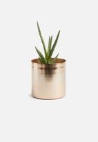Sixth Floor - Gaea planter