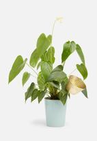 Sixth Floor - Pot plant tea light holder