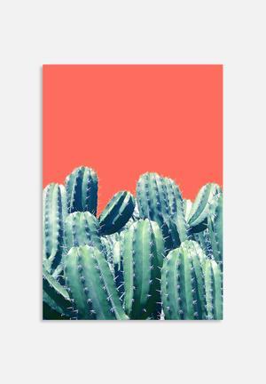 83 Oranges Cactus On Coral Art