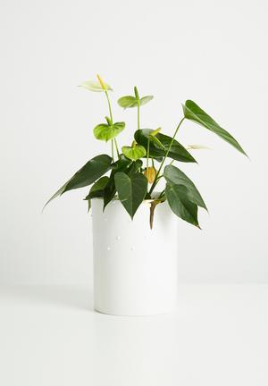 Dotty vase