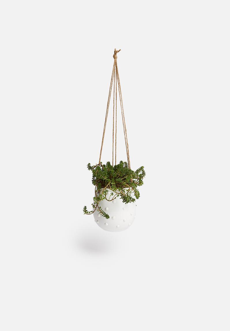 Poppy Hanging Succulent Planter White Urchin Art Decor Accessories Superbalist Com